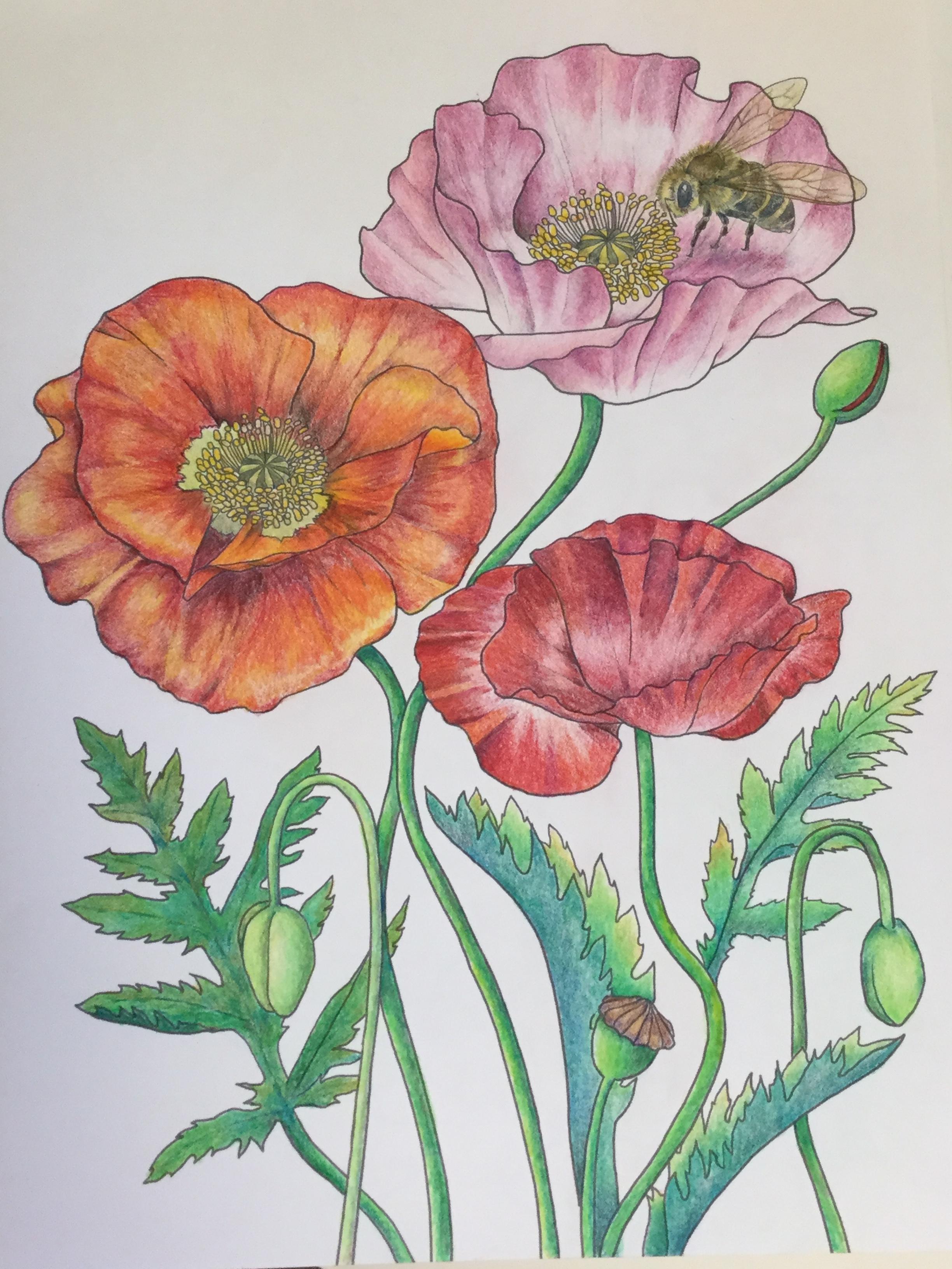 心と脳を整える塗り絵 四季の花もよう